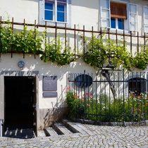 Stara trta Maribor Pohorje Slovenija, foto: Domen Groegl